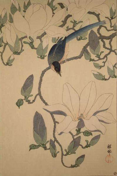 "afbeelding van Ohara ""Shoson"" Koson - black winged magpie on a magnolia"